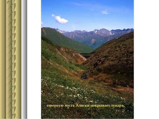 северную часть Аляски покрывает тундра,
