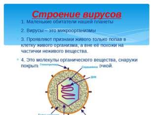 1. Маленькие обитатели нашей планеты 2. Вирусы – это микроорганизмы 3. Проявл