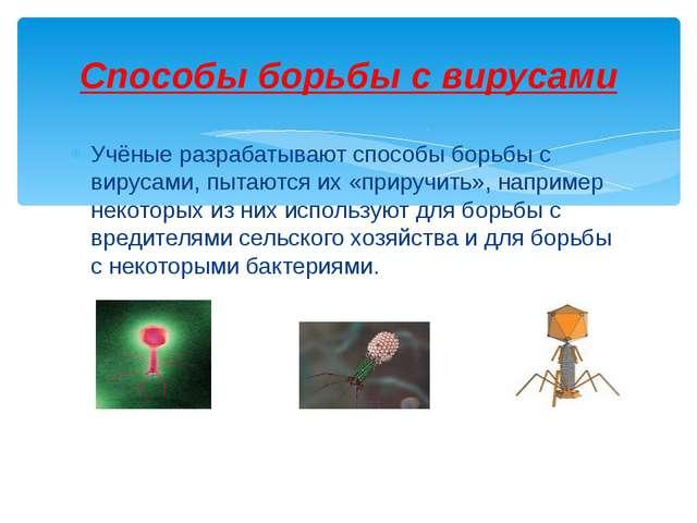 Учёные разрабатывают способы борьбы с вирусами, пытаются их «приручить», напр...