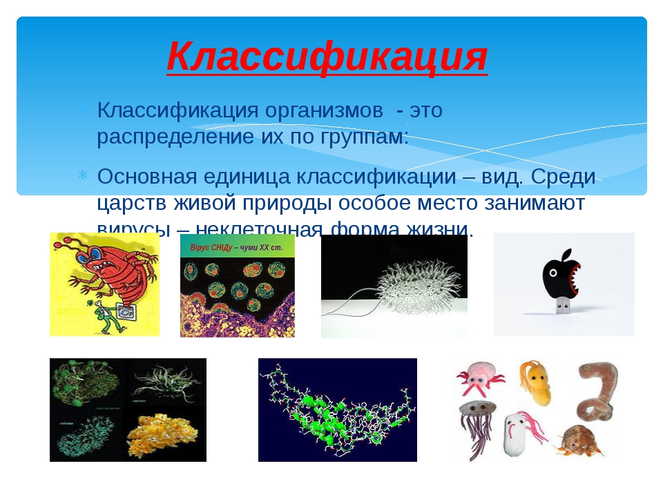 Классификация организмов - это распределение их по группам: Основная единица...