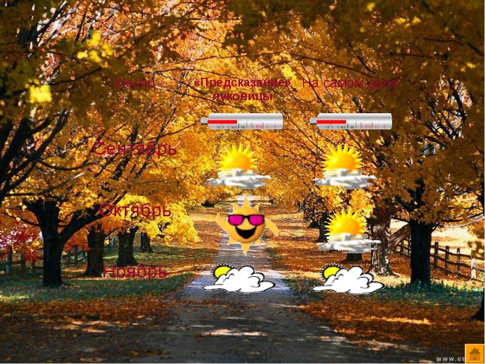 Месяц«Предсказание» луковицыНа самом деле Сентябрь Октябрь Ноябрь
