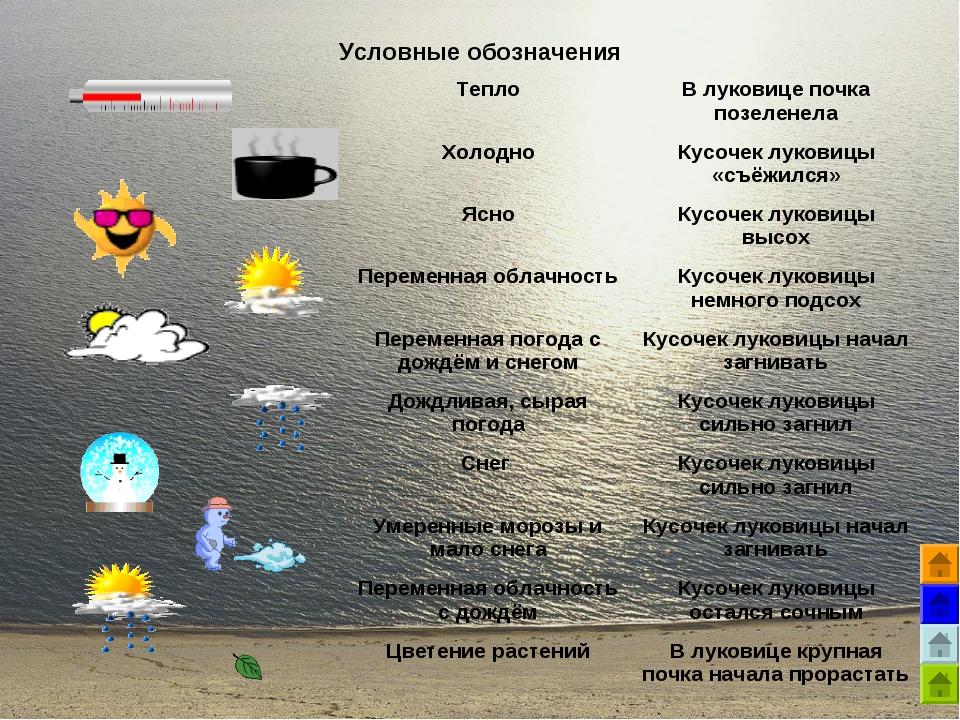 Условные обозначения ТеплоВ луковице почка позеленела ХолодноКусочек луко...