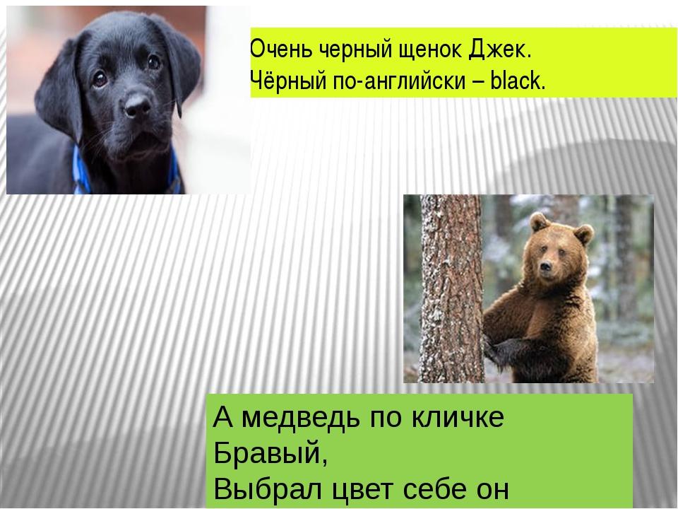 Очень черный щенок Джек. Чёрный по-английски – black. А медведь по кличке Бра...