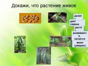 Докажи, что растение живое даёт семена растёт развивается, питается вянет (у