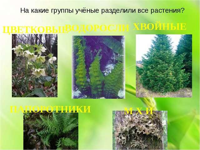 ЦВЕТКОВЫЕ На какие группы учёные разделили все растения? ВОДОРОСЛИ ПАПОРОТНИК...