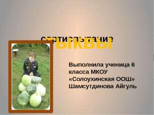 сортиспытание тыквы Выполнила ученица 6 класса МКОУ «Солоухинская ООШ» Шамсут