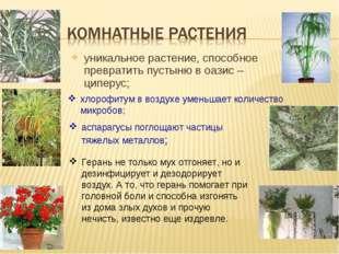 уникальное растение, способное превратить пустыню в оазис – циперус; хлорофит
