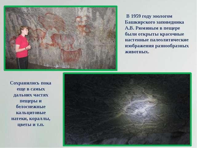 В 1959 году зоологом Башкирского заповедника А.В. Рюминым в пещере были откр...