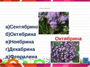 Название какого цветка носит кондитерское изделие? а)карамель б)мармелад в)ир