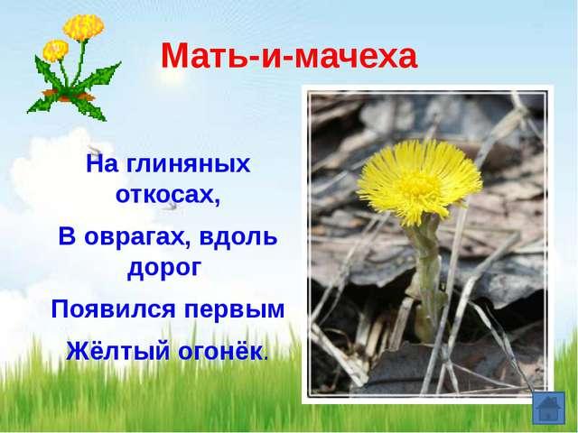 Ветреница Белые и жёлтые сестрёнки скромны, Но первоцветы нам эти очень важны...