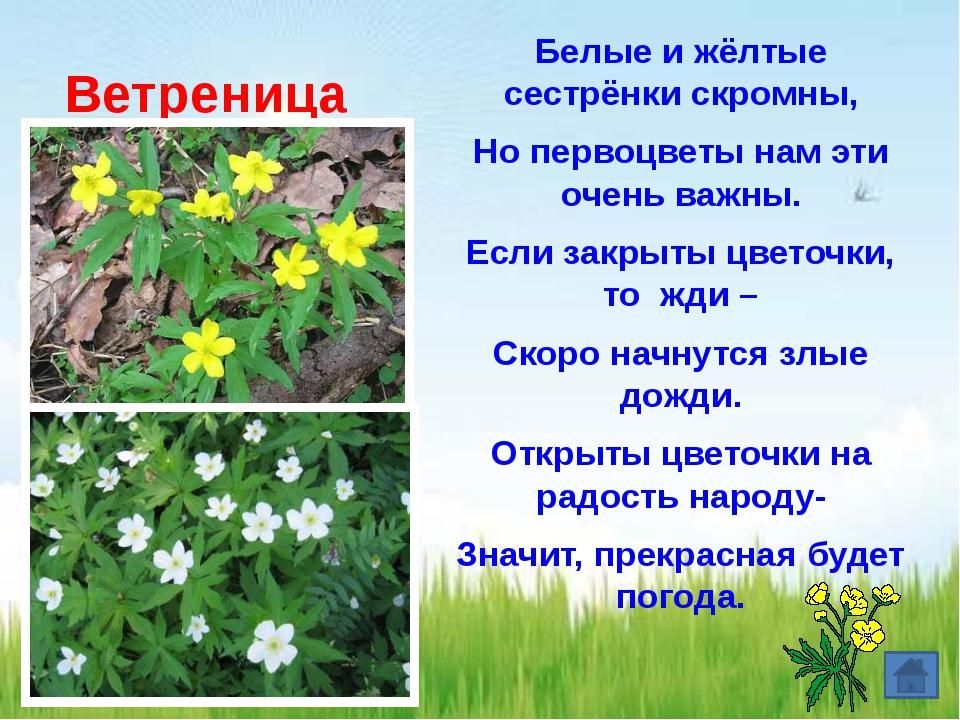 Кого ушедший от бабушки и дедушки Колобок первым встретил на своем пути? а)В...