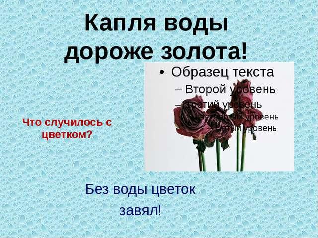 Что случилось с цветком? Без воды цветок завял! Капля воды дороже золота!