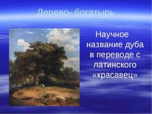 Дерево- богатырь Научное название дуба в переводе с латинского «красавец»