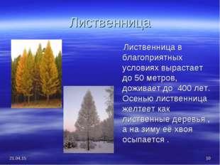 Лиственница Лиственница в благоприятных условиях вырастает до 50 метров, дожи