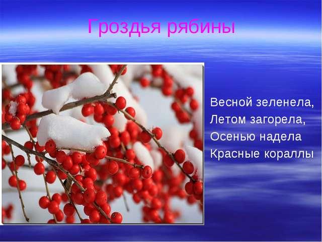 Гроздья рябины Весной зеленела, Летом загорела, Осенью надела Красные кораллы