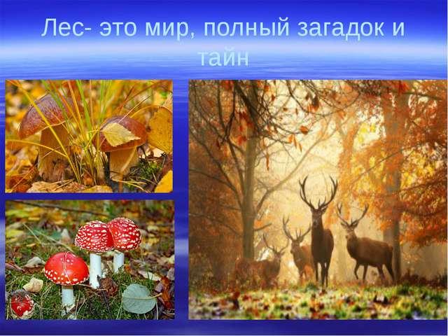 Лес- это мир, полный загадок и тайн