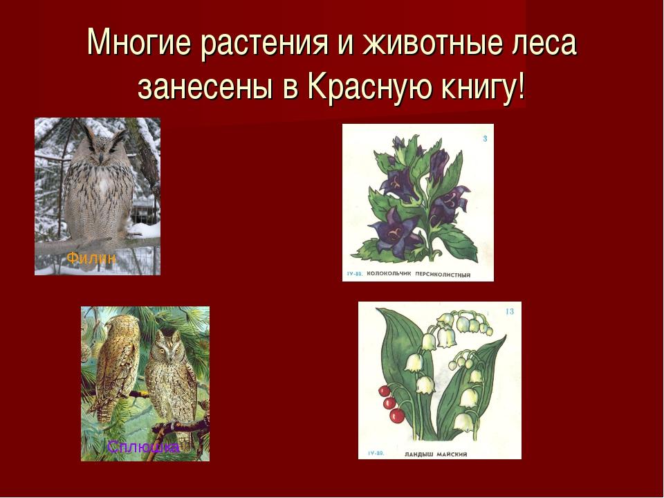 Многие растения и животные леса занесены в Красную книгу! Филин Сплюшка
