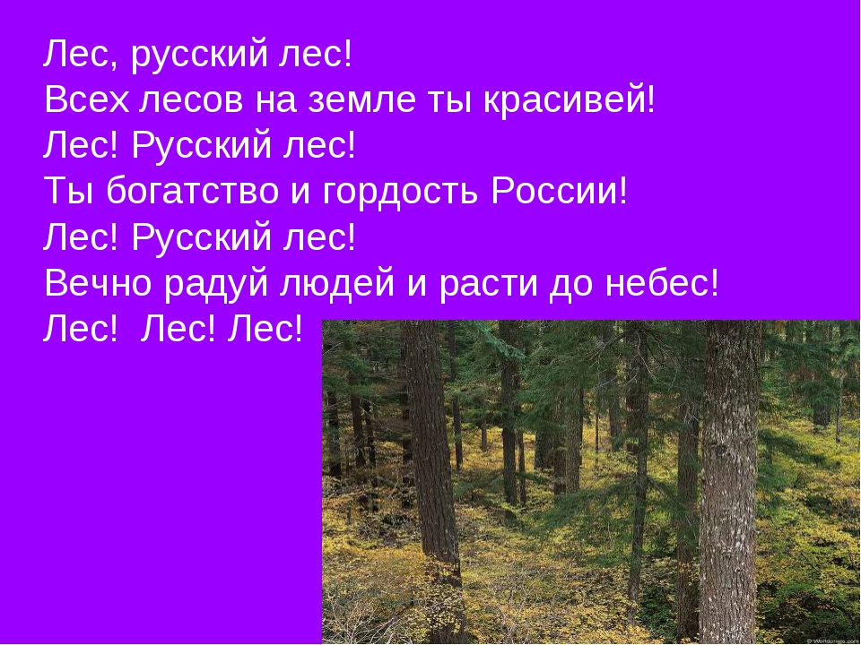Лес, русский лес! Всех лесов на земле ты красивей! Лес! Русский лес! Ты богат...