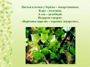 Листья и почки у берёзы – лекарственные, Кора – полезная, А сок – целебный. Н