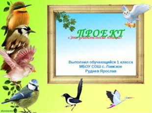 «Эти удивительные птицы» ПРОЕКТ Выполнил обучающийся 1 класса МБОУ СОШ с. Ла