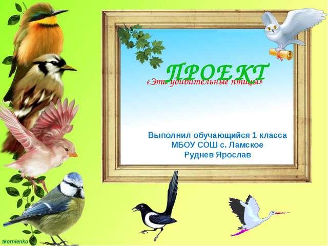 «Эти удивительные птицы» ПРОЕКТ Выполнил обучающийся 1 класса МБОУ СОШ с. Ла...