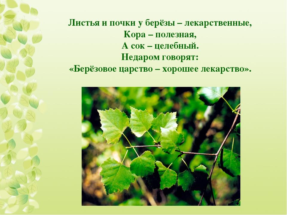 Листья и почки у берёзы – лекарственные, Кора – полезная, А сок – целебный. Н...