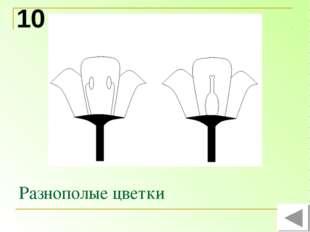 Разнополые цветки 10