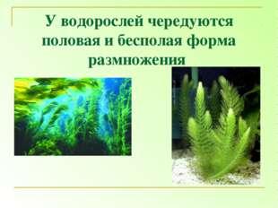 У водорослей чередуются половая и бесполая форма размножения