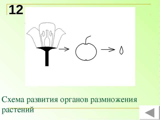 Схема развития органов размножения растений 12