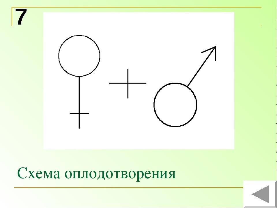 Схема оплодотворения 7