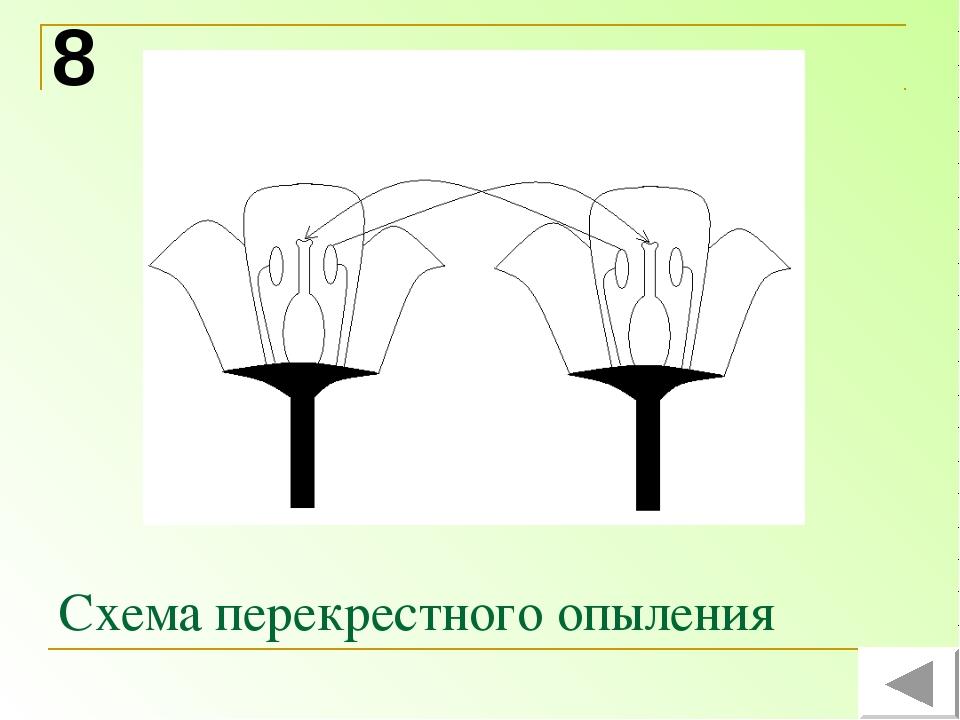 Схема перекрестного опыления 8