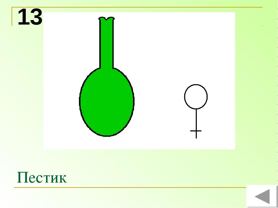 Пестик 13