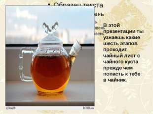 В этой презентации ты узнаешь какие шесть этапов проходит чайный лист с чайн