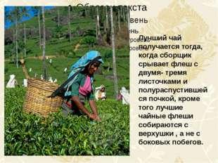 Лучший чай получается тогда, когда сборщик срывает флеш с двумя- тремя листо
