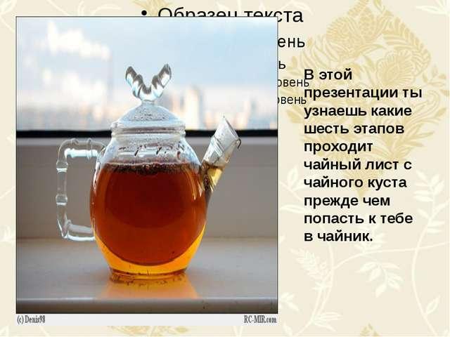 В этой презентации ты узнаешь какие шесть этапов проходит чайный лист с чайн...