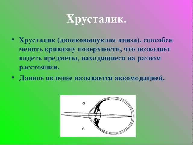 Хрусталик. Хрусталик (двояковыпуклая линза), способен менять кривизну поверхн...