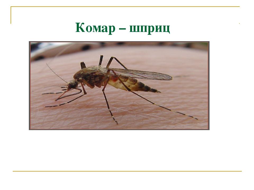 Комар – шприц