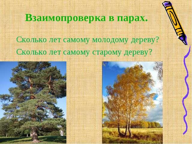 Взаимопроверка в парах. Сколько лет самому молодому дереву? Сколько лет самом...
