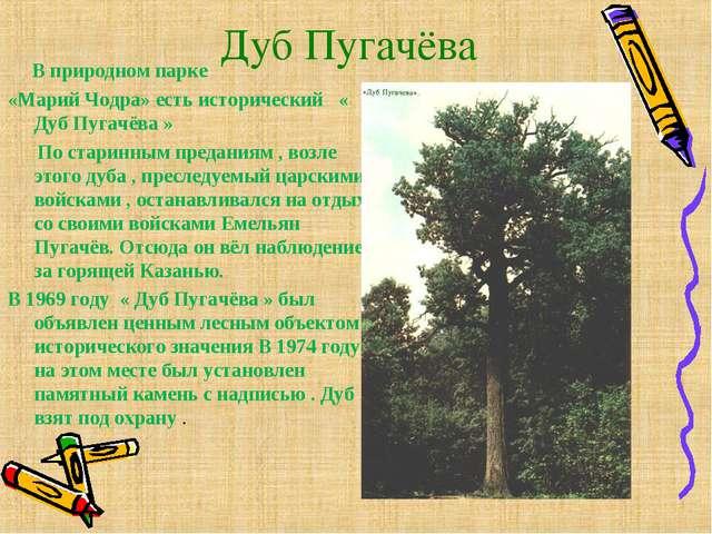 Дуб Пугачёва В природном парке «Марий Чодра» есть исторический « Дуб Пугачёва...