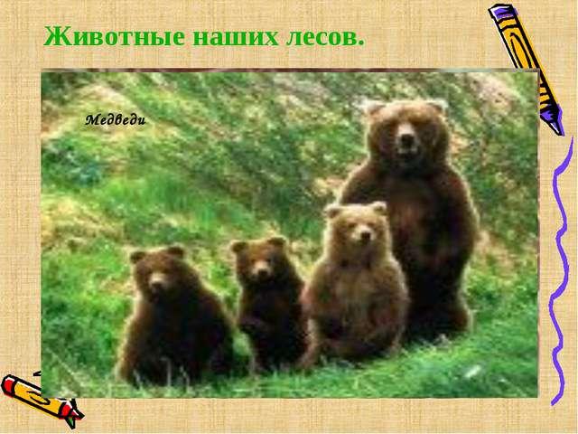 Животные наших лесов.