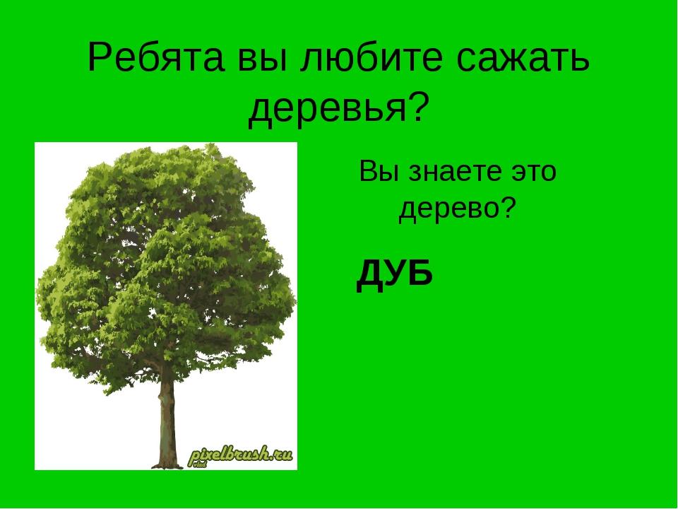 Ребята вы любите сажать деревья? Вы знаете это дерево? ДУБ
