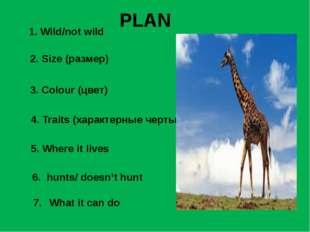 1. Wild/not wild 2. Size (размер) 3. Colour (цвет) 4. Traits (характерные чер