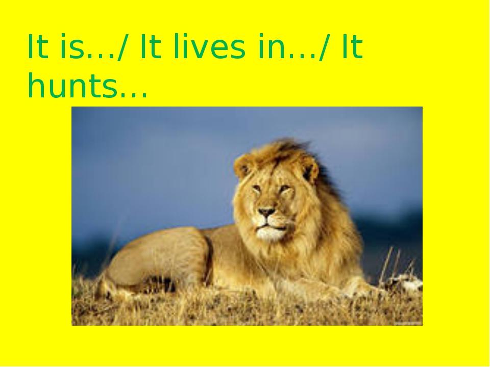 It is…/ It lives in…/ It hunts…