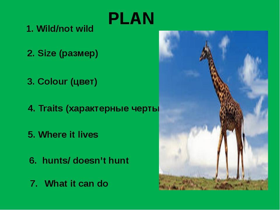 1. Wild/not wild 2. Size (размер) 3. Colour (цвет) 4. Traits (характерные чер...