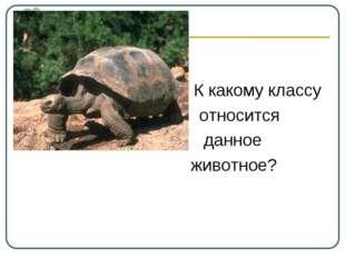 К какому классу относится данное животное?