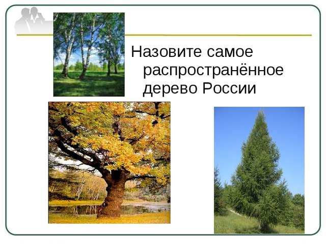 Назовите самое распространённое дерево России