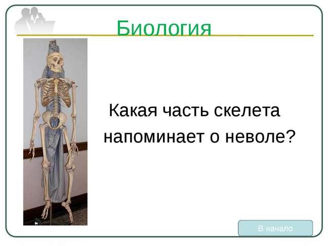 Биология Какая часть скелета напоминает о неволе? В начало