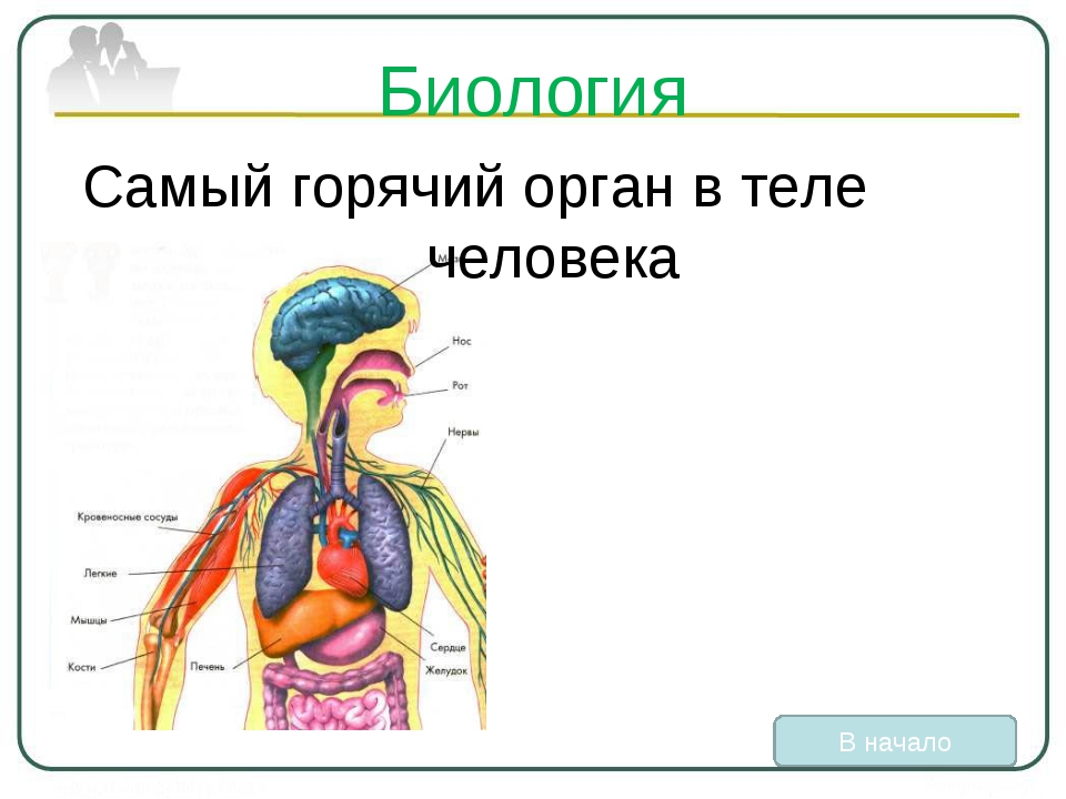 Биология Самый горячий орган в теле человека В начало