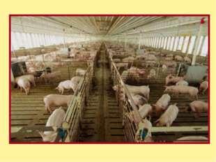 Сергей Терехов из Куйтунского района завез в свое хозяйство коров породы гере
