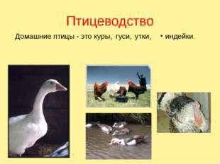 В водоемах Куйтунского района с 2011 года началось разведение сазана, сейчас